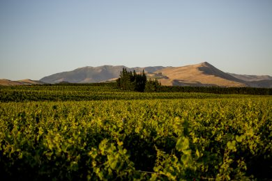 Waipara Hills The Dean Vineyard - HERO shot