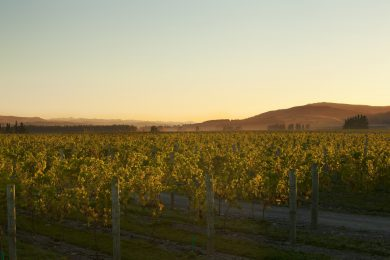 Waipara Hills The Home Block Vineyard